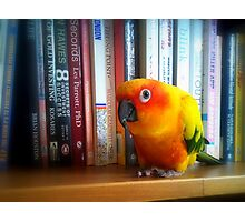 You've Got To Be Kidding Me! A Book By Les Parrott - Sun Conure - NZ Photographic Print