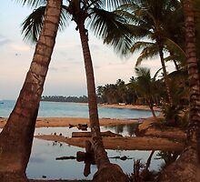 tropical view by Paola  Massa