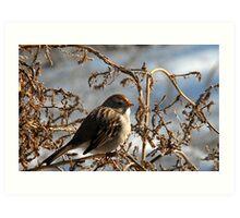 Feeding Sparrow Art Print
