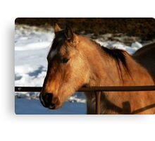 Tan Horse Canvas Print