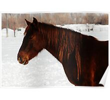 Red Horse - Dread Locks Poster