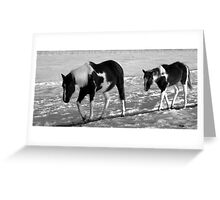 Mother & Foal Greeting Card