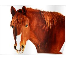 Red Horse Poster