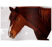 Horse - Soft Light Poster