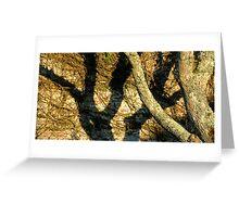Tree Shadow Greeting Card