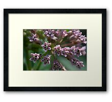 HDR Composite - Multiple Exposure Ghosting of Milkweed 2 Framed Print