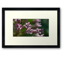 HDR Composite - Multiple Exposure Ghosting of Milkweed 3 Framed Print