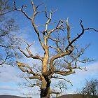 Blasted Tree by Lee Kerr