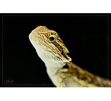 Spike! Photographic Print
