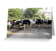 Cornish Cows Greeting Card