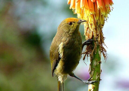 Natural Pollen Highlights! - Bellbird - Southland by AndreaEL