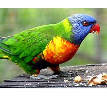 I'm Nuts About Nuts! - Rainbow Lorikeet - Maple Glen NZ Photographic Print