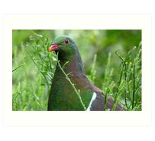 Environmentally Friendly - Wood Pigeon - Pukerau Art Print