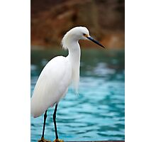 Egret 3 Photographic Print