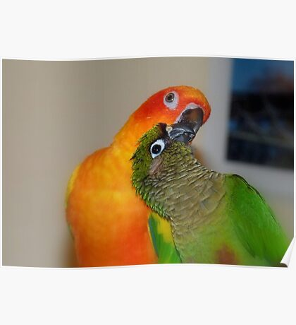 Sunshine Lights Up My Life! - Conures - NZ Poster