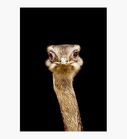 ostrich face Photographic Print