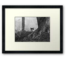 Peek-a-Boo B&W Framed Print