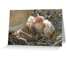 Pterodactyl - Beautiful-Ugly - Baby Collard Dove - NZ Greeting Card