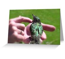 One Flew Over The Cuckoo's Nest! - Shining  Cuckoo - NZ Greeting Card