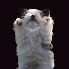 Gizmo Gremlin by KeepsakesPhotography Michael Rowley