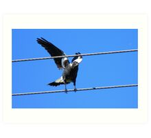 Lucky Sign -Happiness Magpie - NZ Art Print