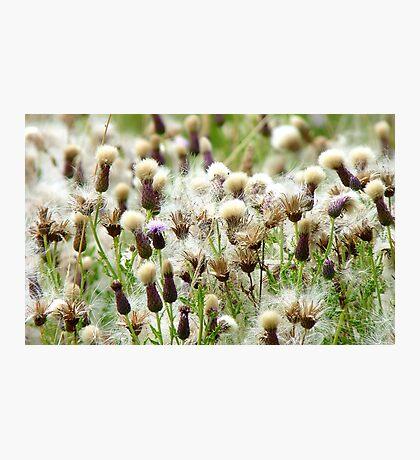 Thistle City - Weeds - NZ Photographic Print