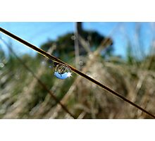 Horton Hears A Who -  Dew Drop - NZ Photographic Print