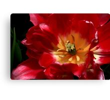 Heart Of A Tulip Canvas Print