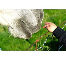 Have No Fear I'll Be Gentle! - Child & Horse - NZ Photographic Print