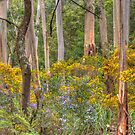 Australia Springtime - Mount Wilson/Irvine - The HDR Experience by Philip Johnson