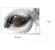 Reflection In A Golden Eye - Horse - VZ Postcards