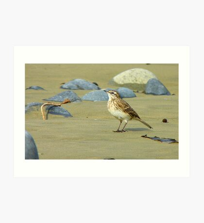Hey, I'll Pose! - Pipit - New Zealand Art Print