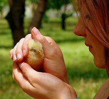 Ohh.. So Precious... - Baby Chick - NZ by AndreaEL