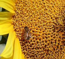 Sunny Bee by Jordan N Clarke