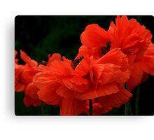 Poppy Petals Canvas Print