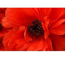Poppy Palette Photographic Print