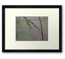 Lynx Spider Framed Print