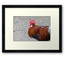 roosters in the farm Framed Print