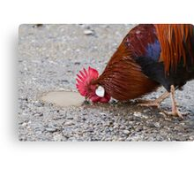 roosters in the farm Canvas Print