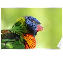 Rainbow Lorikeet - Australia Poster