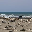 The Beach at Florence by BubbaGeorge