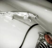 Jaguar Mascot by Frank  McDonald
