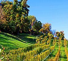 The Vineyard by Eileen McVey