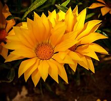 Yellow Flowers by Dave  Knowles
