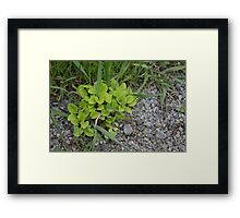 HDR Composite - Wee Green Plant Gravel and Grass Framed Print