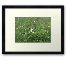 HDR Composite - White Rose in Bramble Framed Print