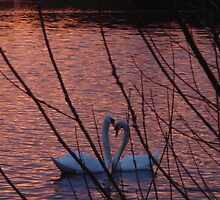 Swan Lake by Prys