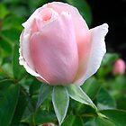 Pink Rosebud by BizziLizzy