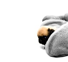 Peeping Pug by Oneof42