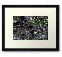 HDR Composite - Moss and Tree Roots on the Cliff Framed Print